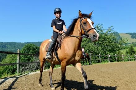 reiterhof hier k nnen sie kostenlos reiten und unsere pferde kennenlernen aleitung im umgang. Black Bedroom Furniture Sets. Home Design Ideas